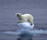 Kutuplarda Buzulların Erimesi